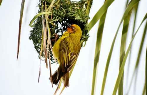gamma photography of yellow and black bird